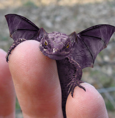 Animalia Baby-Dragon-fantasy-8836677-390-400